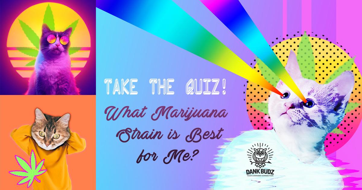 Quiz: What Marijuana Strain is Best for Me? - Dank Budz