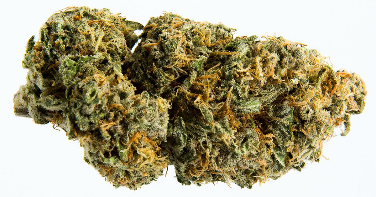 An In-Depth Guide to Blue Dream Cannabis and CBD