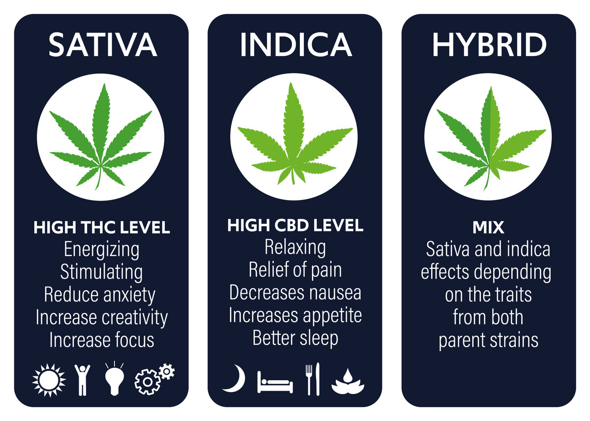 What Are the Different Marijuana Types