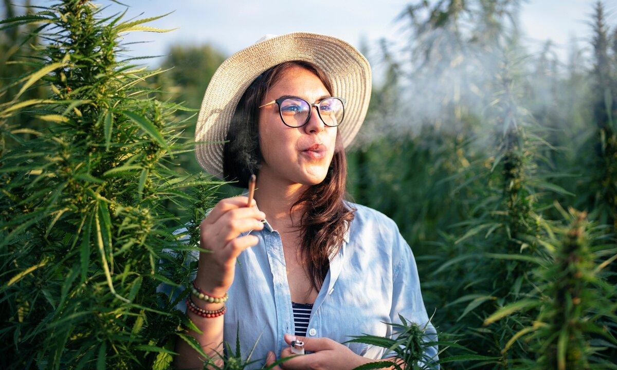Choose the Right Cannabis Strain